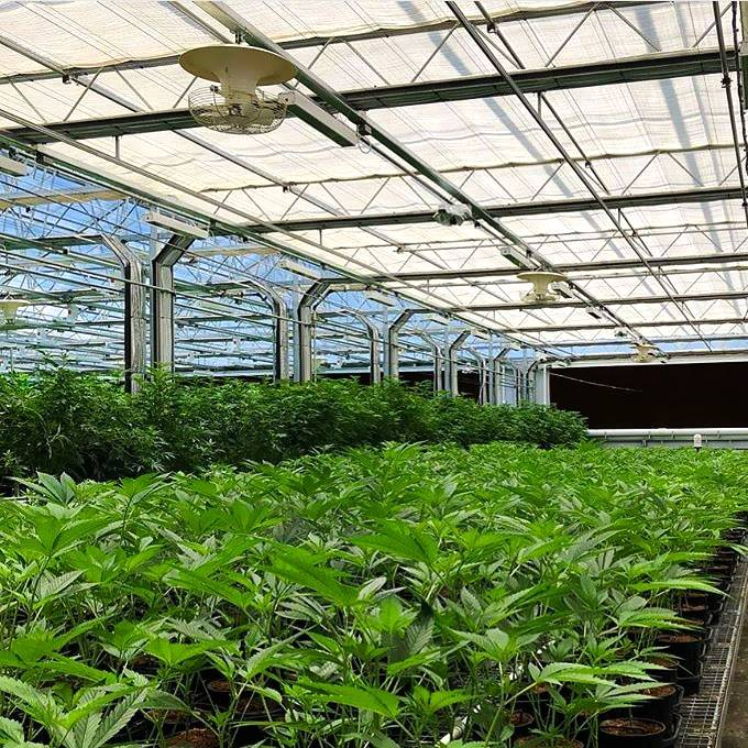 Greenhouses Green House Greenhouse Polycarbonate Green House Greenhouses For Agriculture