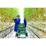polycarbonate greenhouse panels.jpg