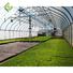 greenhouse 12.jpg