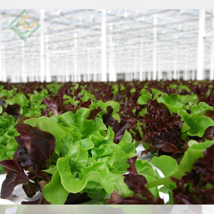 Lettuce Greenhouse