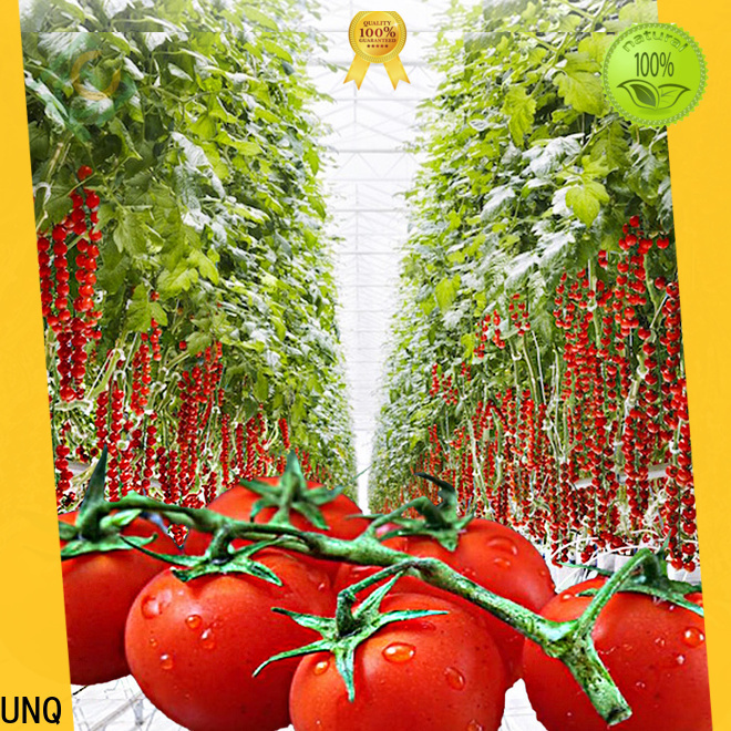 UNQ Latest 8x12 greenhouse manufacturers for agricultural vegetable growing